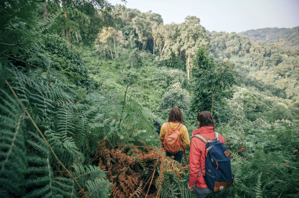 Hiking through Uganda with Intrepid Travel Credits: Damien Raggatt - Intrepid Group
