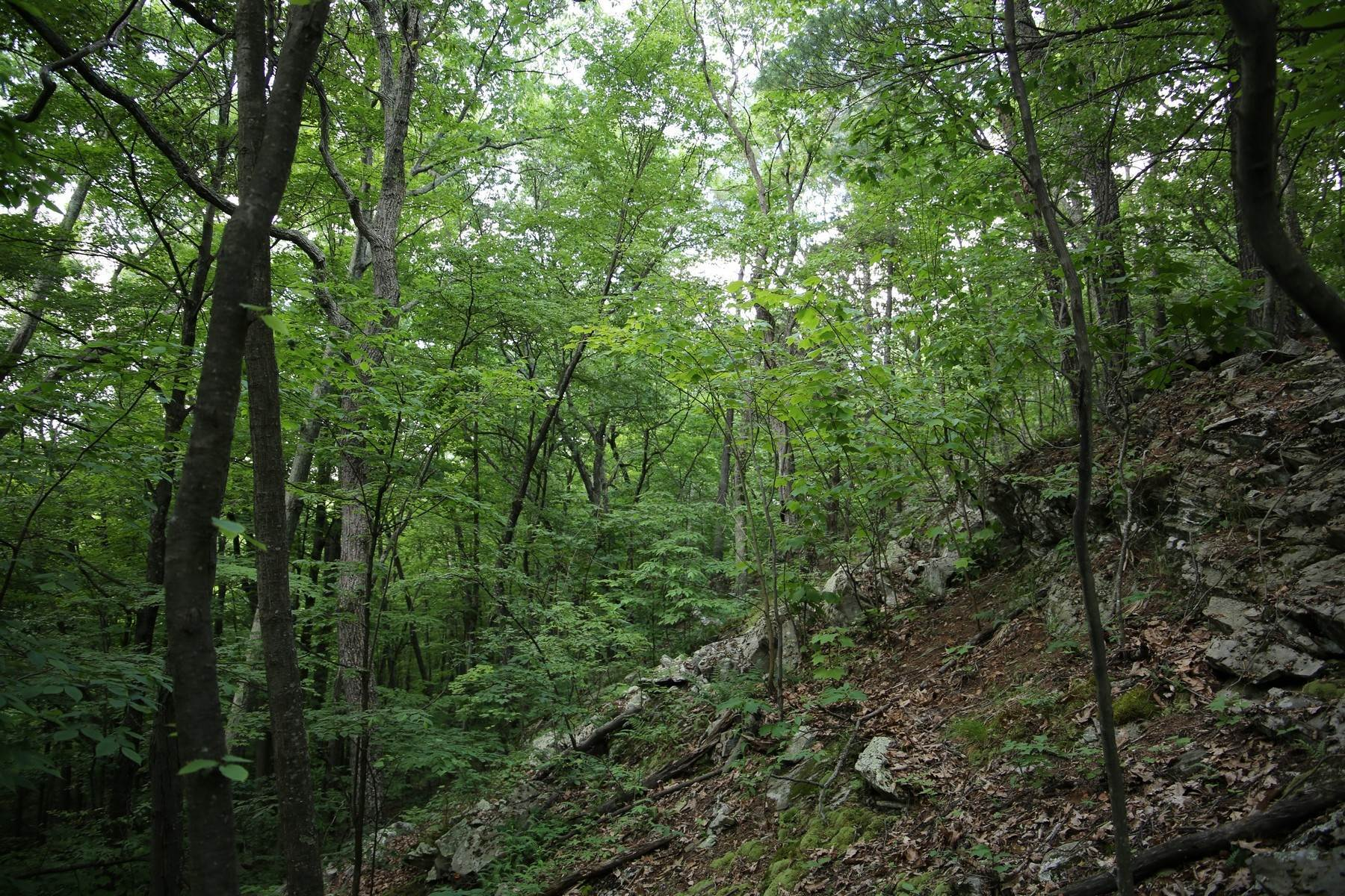7. Land for Sale at Lily Lake Rd with access off Kisor Rd 70 Kisor (easement) Road, Lily Lake Rd Highland, New York 12528 United States